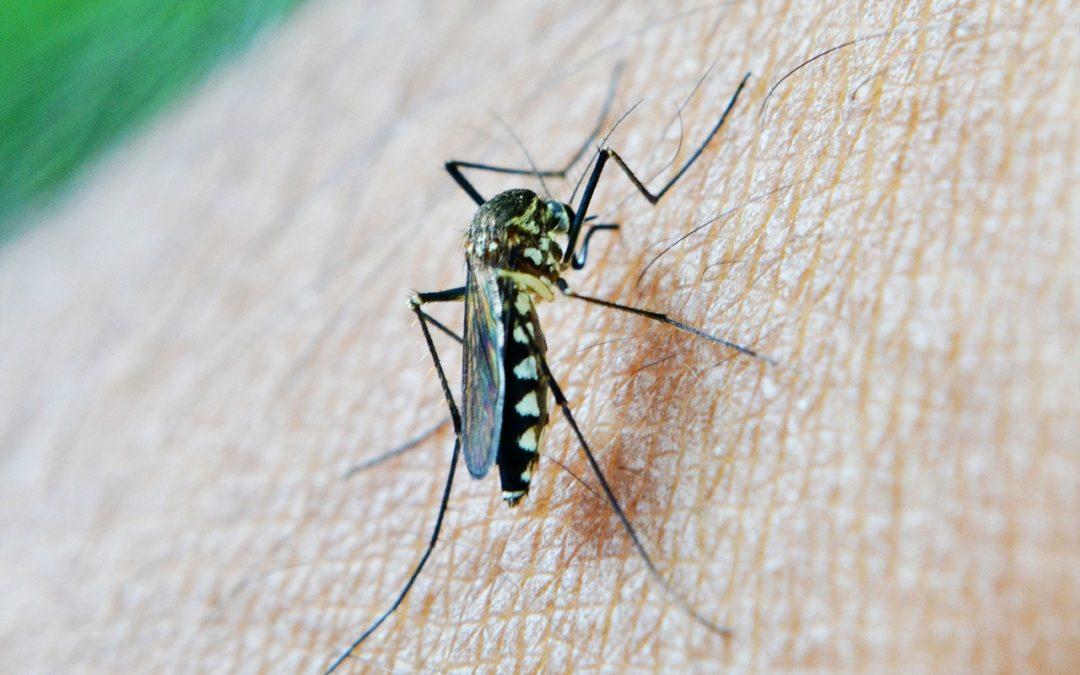 Afinal, o que é Chikungunya?